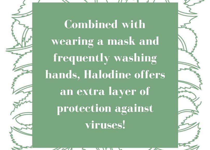 Halodine Nasal Swab Available at Thompson Chemists